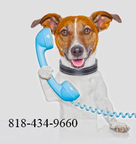 Logo -Dog holding blue phone 818-434-9660